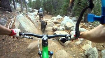 Mr. Toads Wild Ride – Lake Tahoe