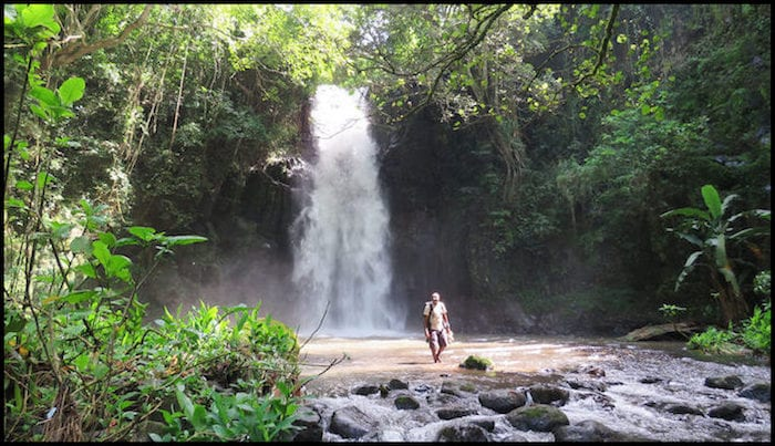 Tanzania Jungle Safari