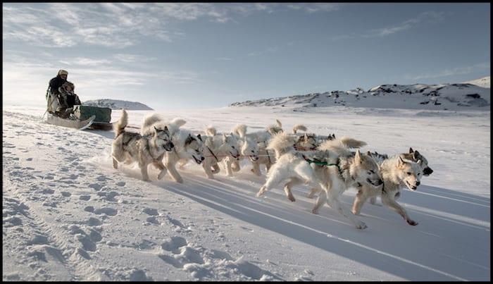 Greenland Dogsledding Winter Adventure