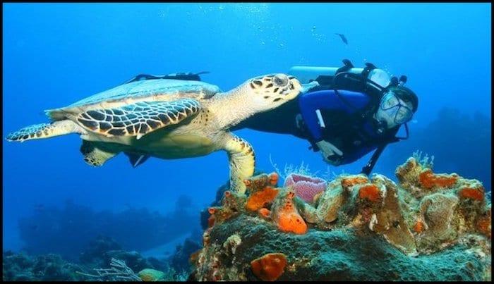 Sea Turle Snorkeling Summer Adventure