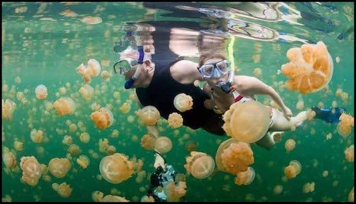 Swim With Jellyfish Summer Adventure