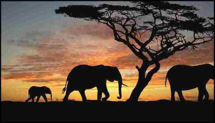 Tanzania Safari Summer Adventure