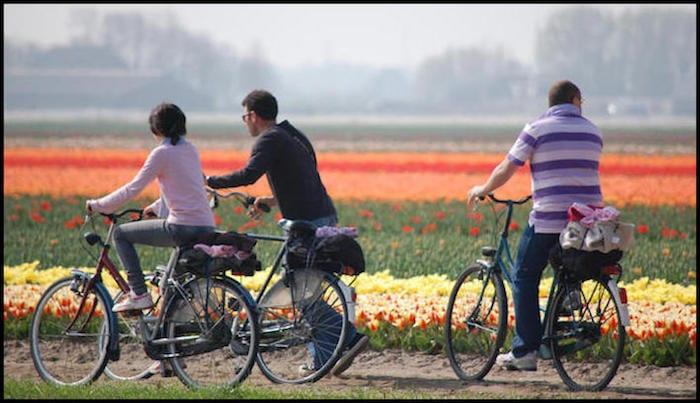 Tulip Ride Netherlands