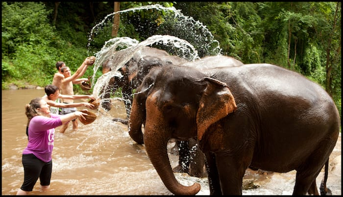 Elephant Sanctuary Thailand Summer Adventure