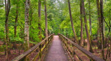 Congaree National Park | AdventureHacks